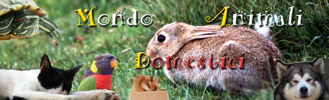 Mondo Animali Domestici MAD