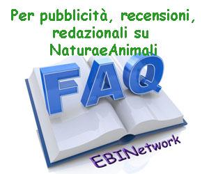 EBINetwork per NeA